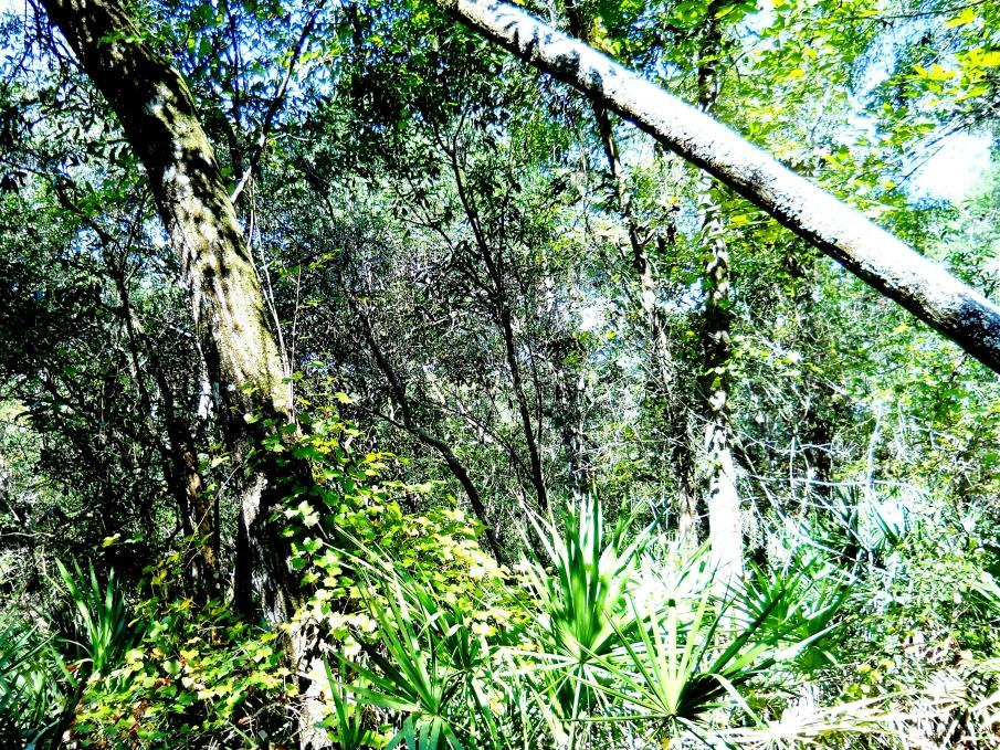 Bright October Sunshine October 12 1013 2012-10-12 001 (2)
