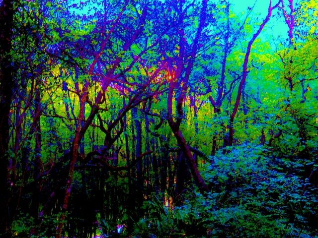 HIgh Water    ⓒ Bearspawprint 2014
