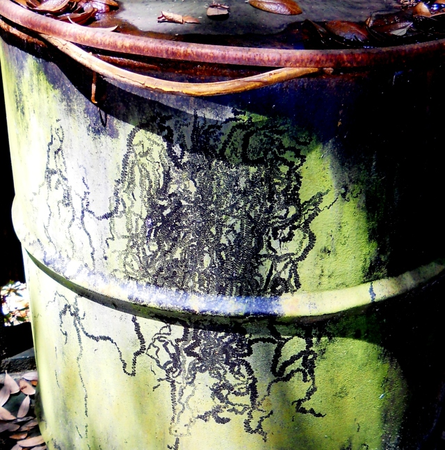 Closer look at squiggles in algae on fifty gallon barrel  ⓒ Bearspawprint 2014