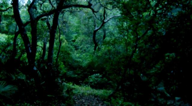 Evening Light Under The Trees ⓒ Bearspawprint 2014