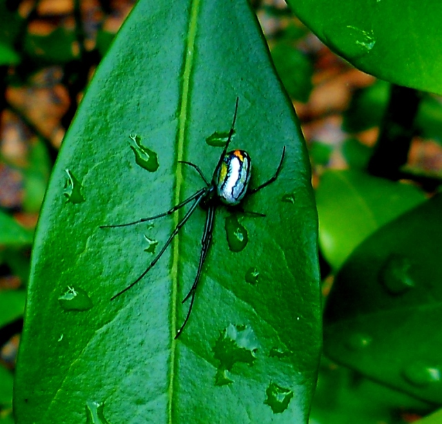 Little Spider After a Rain shower  MAY 3 ⓒ Bearspawprint 2014