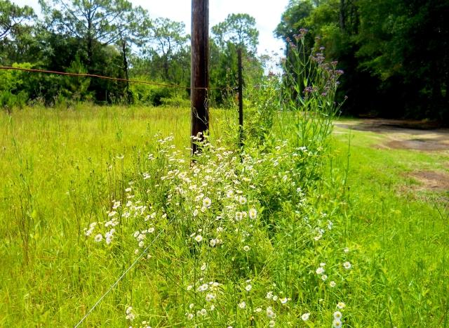 May Wild-Flowers ⓒ Bearspawprint 2014