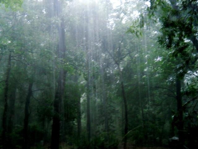 Raining  ⓒ Bearspawprint 2014