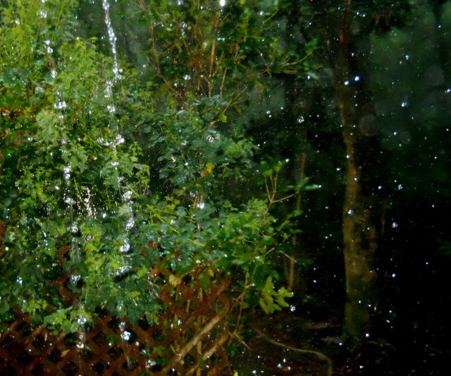 Rain ⓒ Bearspawprint 2014-
