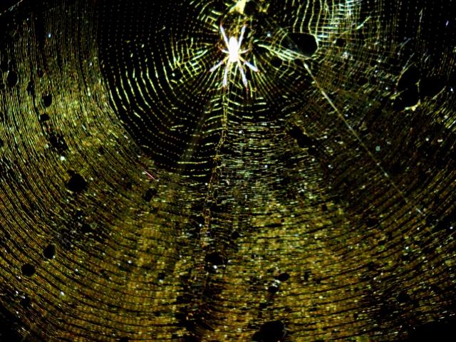 Spider At Night ⓒ Bearspawprint 2014