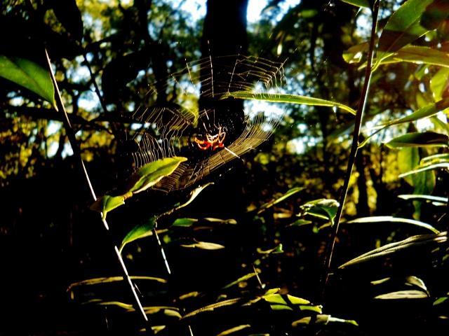 Colorfull little fellow in the October sunlight  ⓒBearspawprint2014
