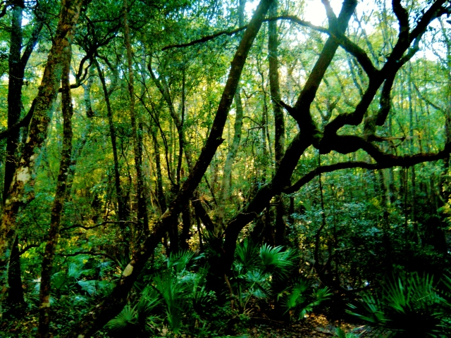 October  St. Mary's River swamp ⓒBearspawprint2014