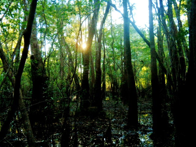 October Sun Over The St. Mary's River .. if I could just get to it ⓒBearspawprint2014