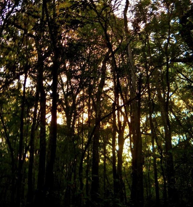 The Sun Sets On October ⓒBearspawprint2014