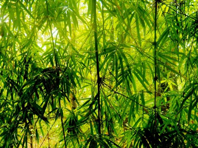Through The Wet Bamboo ⓒBearspawprint2014