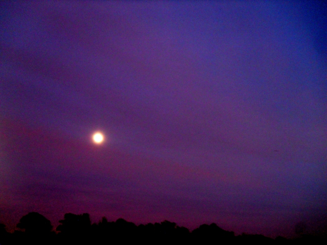 La Luna, Early November ⓒBearspawprint2014
