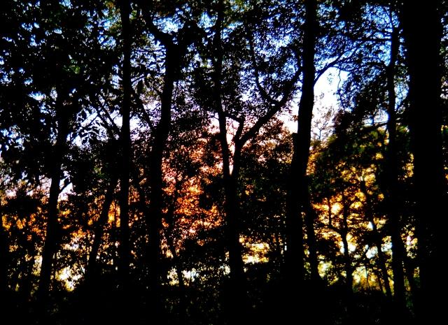 Sunset  North Florida Woods November    ⓒBearspawprint2014
