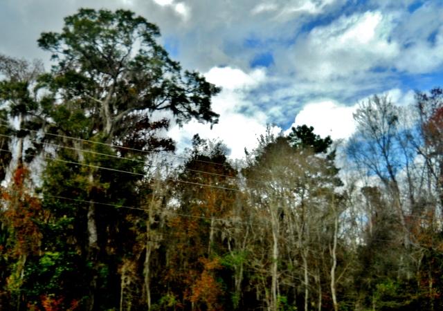 Near Boggy Creek  ⓒ Bearspawprint2014