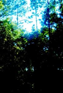 Light and Shadow     ⓒBearspawprint2014