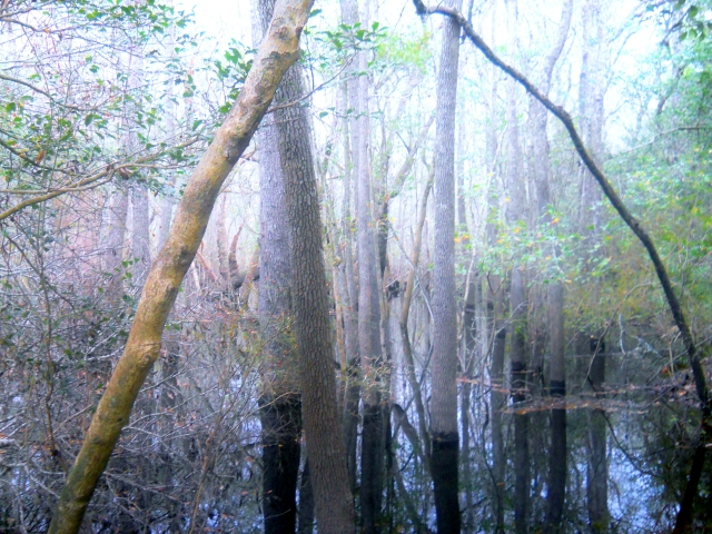 misty afternoon river swamp ⓒBearspawprint2014