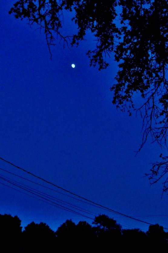 Moon  ⓒWalkerPhotos2014-12-02