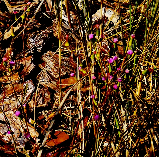 Hiding underneath and behind a decorative grass plantingⓒBearspawprint2015 2015-01-22