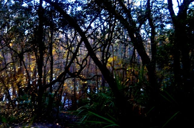 Late Afternoon - High Water - St. Mary's River Swamp - North East Florida ⓒBearspawprint2015 2015-01-24