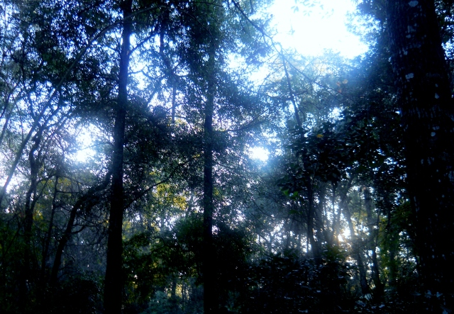Misty January Sunrise South East ⓒBearspawprint2015