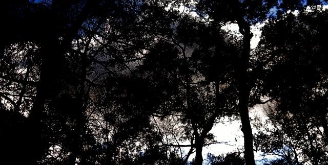 Strobe Light Clouids ⓒBearspawprint2015  01.26.2015