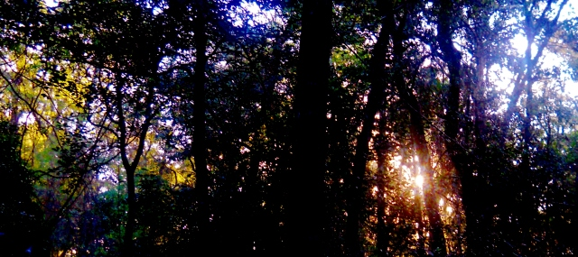 Saturday Morning in the North East Florida Woods   January Facing South East ⓒBearspawprint2015