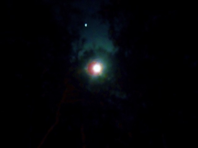 Moonlight through water oaks and hickory trees ⓒBearspawprint2015  03.05.2015