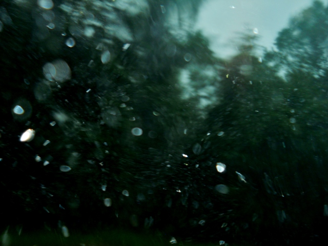 Wind and Rain ... ⓒBearspawprint2015  04.19.2015
