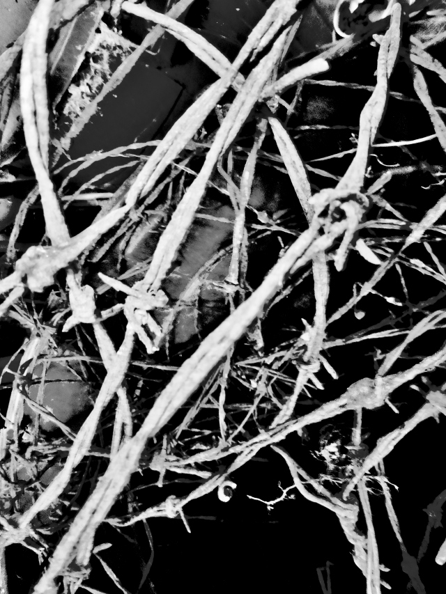 Barbed Wire Bouquet (Black and White)  ⓒBearspawprint2015 002 (3)