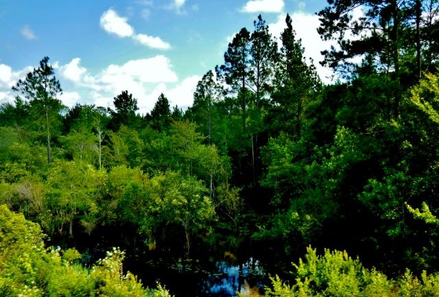 St. Marys River, Georgia ⓒBearspawprint2015