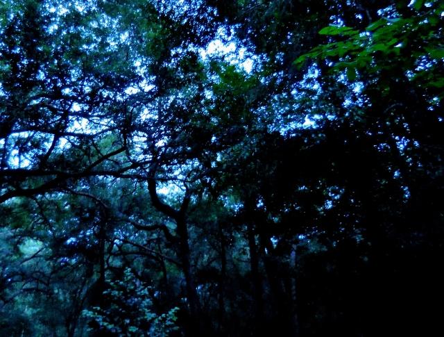 The Beautiful Blue Hour ⓒBearspawprint2015   2015-06-09