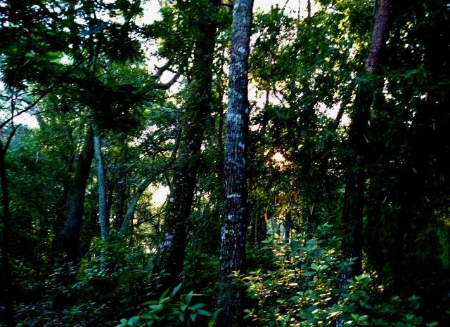 July Morning In My Wild Garden   ⓒBearspawprint2016
