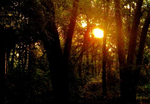 Autumn Sunrise  ⓒBearspawprint2016