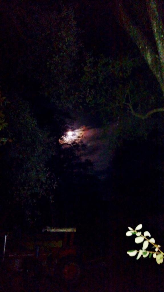 December 12, 2016 3AM Tractor In Moonlight ⓒBearspawprint2016
