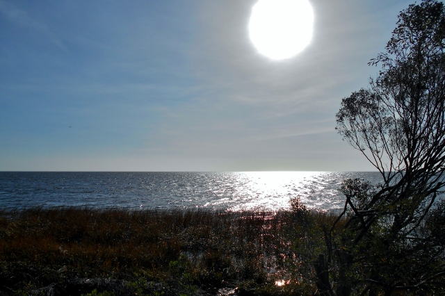 LIGHT AND WATER ⓒBearspawprint2016