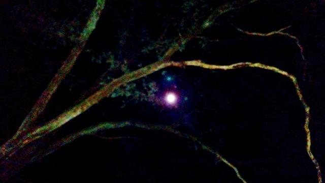 Moon Behind Branches Dec. 12, 2016 10PM ⓒBearspawprint2016