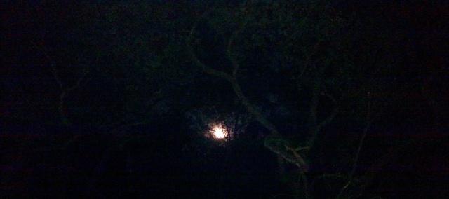 Full Moon In Scorpio - ⓒBearspawprint2017