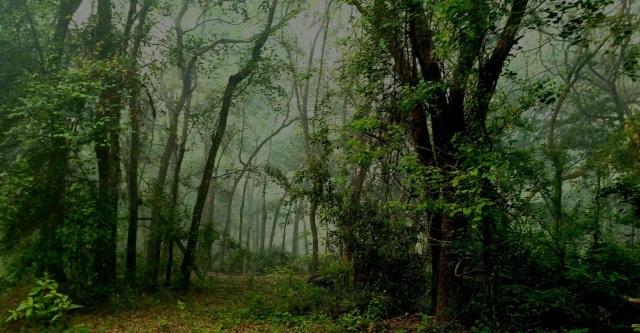 Morning Fog ⓒBearspawprint2017
