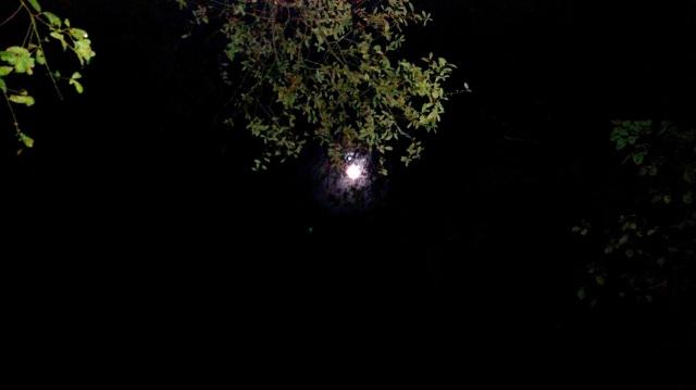 Moon  ⓒBearspawprint2017