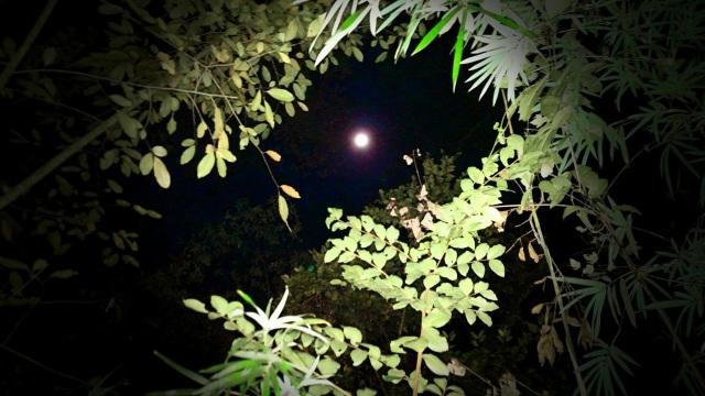 Early Morning Moon November 3, 2017 ⓒBearspawprint2017